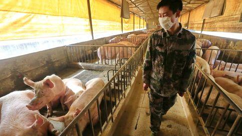 La amenaza de la nueva gripe porcina china: Hay que trabajar ya en una vacuna