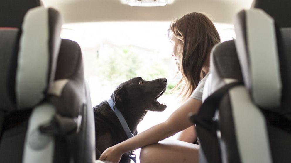 Hoy me muero: La emocionante fiesta de despedida de un perro
