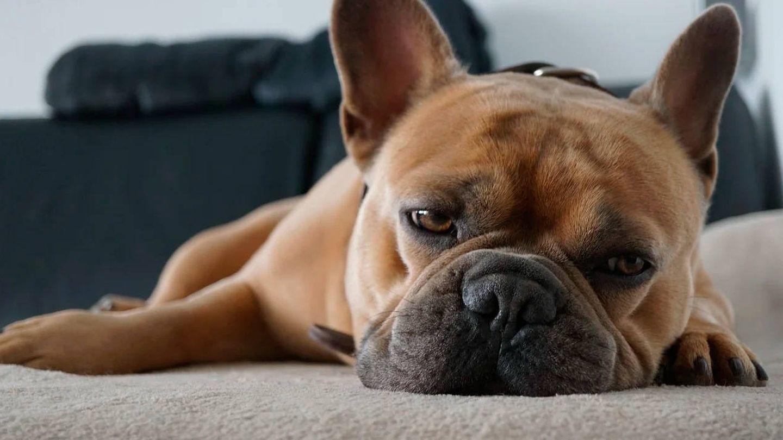 Las mascotas también generaron algo de estrés a sus dueños (Foto: Pixabay)
