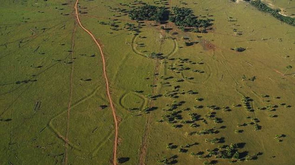 Foto: Estos geoglifos gigantes han sido descubiertos tras la deforestación de la selva amazónica. (Universidad de Exter)
