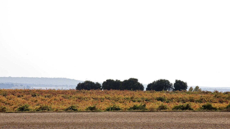 Viñas del Cénit, la bodega que hizo grandes los tintos de Zamora