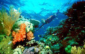 Inversión verde: los grandes fondos, al rescate de la barrera de coral