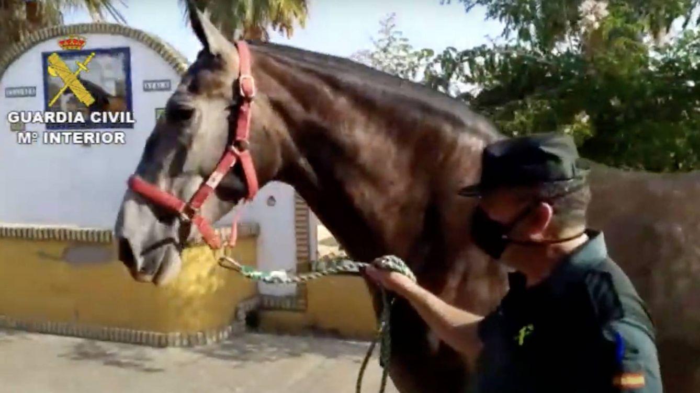 Detenidos por robar un caballo de 50.000€ en Utrera para cobrarse una deuda de 200