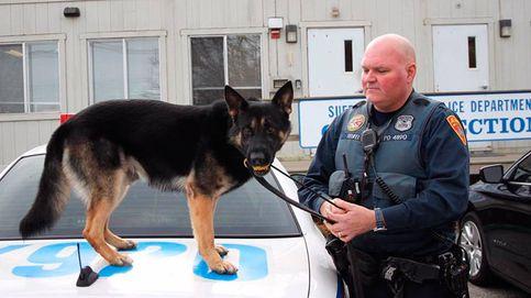 Maverick, el perro nombrado 'policía del verano' tras rescatar a dos ancianos