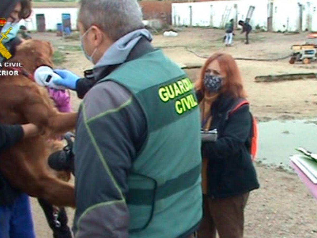 Foto: Los agentes del Seprona encontraron multitud de perros con enfermedades (Guardia Civil)