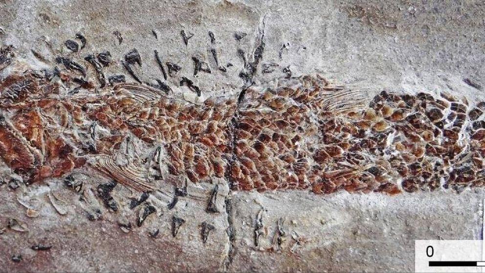 Hallan fósiles de un combate entre animales de hace 200 millones de años
