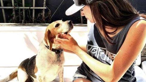 Guy, el beagle de Meghan Markle: historia de un perro de refugio que acabó en la realeza