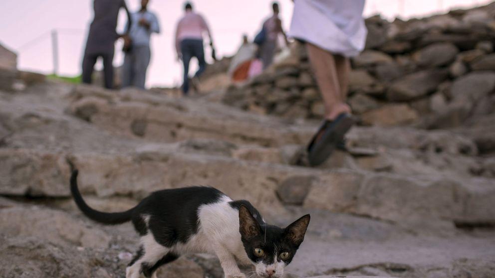 Aparece un gato quemado en una papelera del centro de  Jaén