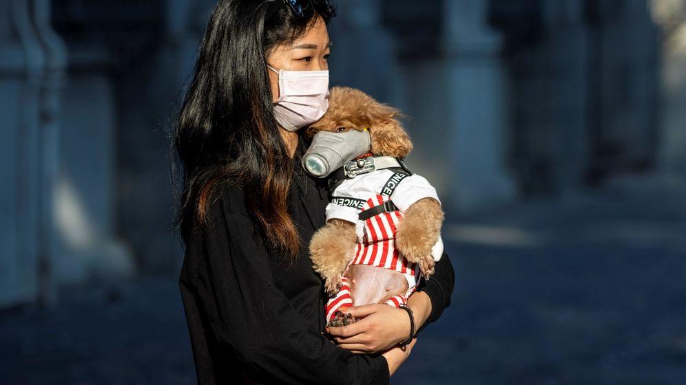 Foto: Una mujer y su perro pasean por la ciudad china de Cantón protegidos con mascarilla. Foto: EFE Alex Plavevski