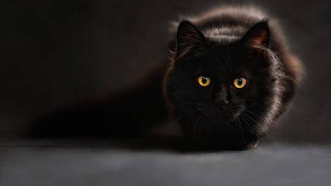Ganan millones de euros a la lotería y se lo quieren gastar en su gato