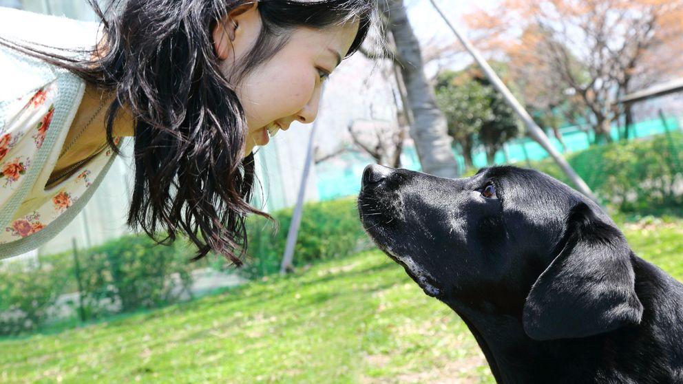 Por qué mirar a tu perro hace que ambos os sintáis mejor