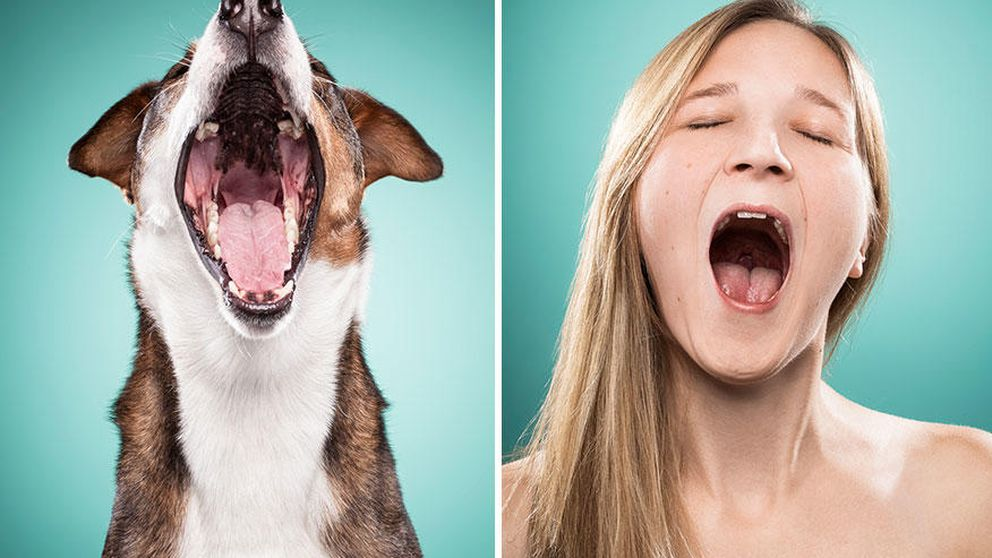 Cómo los dueños de los perros son capaces de imitar a sus mascotas