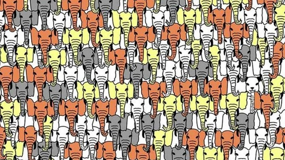 Juegos No Apto Para Vagos Visuales Encuentra El Oso Panda