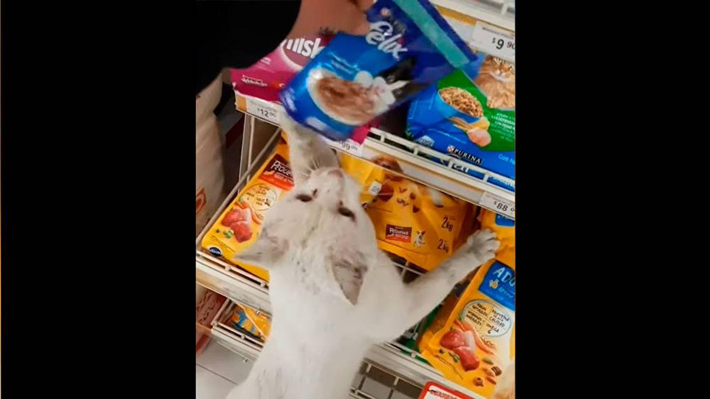 Un gato guía a una mujer al supermercado y le señala su comida favorita