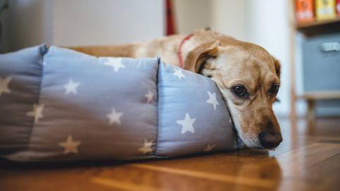Cómo acostumbrar a tu perro a quedarse solo después del confinamiento