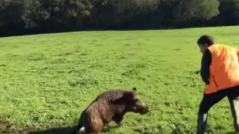 Vídeo | Un jabalí 'resucita' ante sus cazadores y la emprende contra ellos