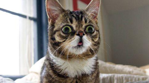 El gato 'influencer' de ojos saltones que puede ayudar a acabar con la osteoporosis