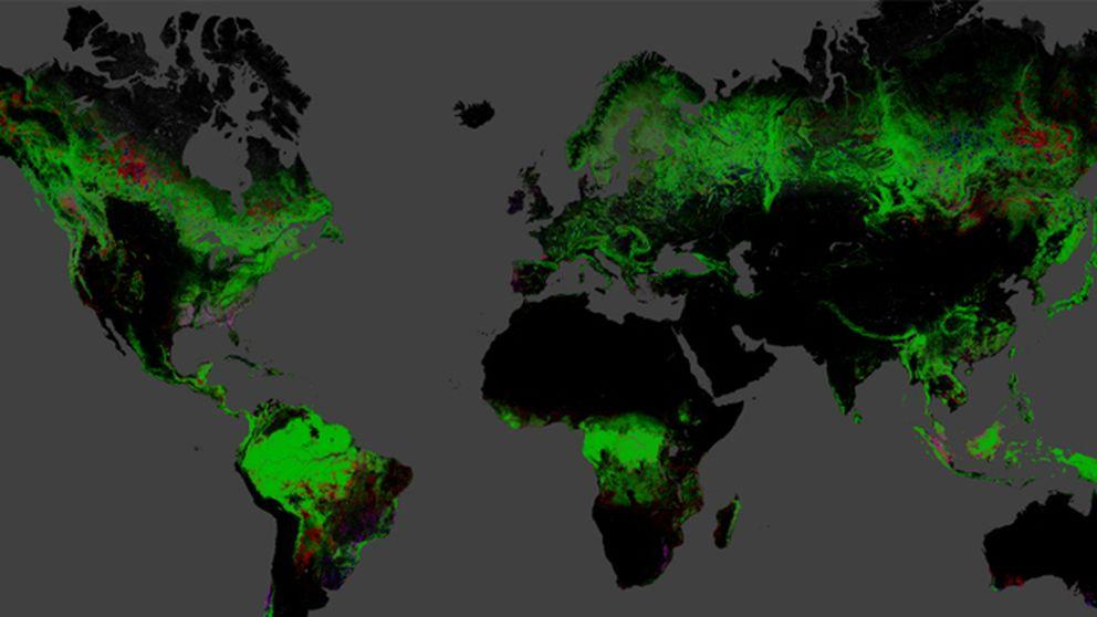 Un mapa interactivo muestra la pérdida forestal del planeta