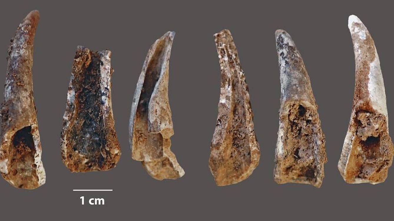 Los neandertales comían peces y mariscos, lo que ayudó a su desarrollo cerebral