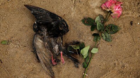 Pájaros muertos, dibujos y conos de tráfico: lo que el Támesis esconde en sus profundidades