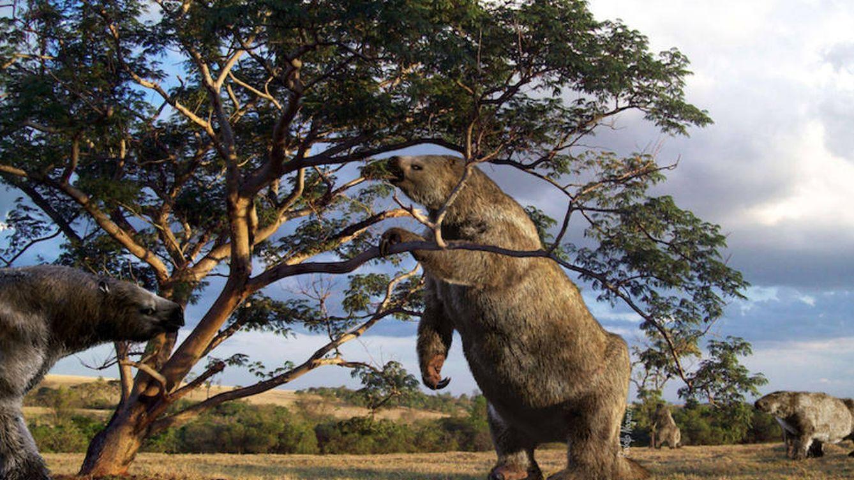 Foto: Ilustración del perezoso gigante (Rodolfo Nogueira / USP)