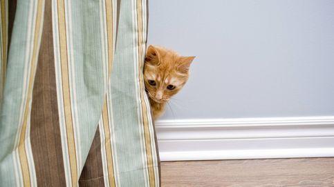 ¿Tu gato le tiene miedo a la aspiradora de casa? Esta es la razón científica