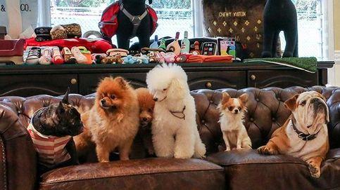 Perro deluxe: así son los servicios de superlujo para mascotas
