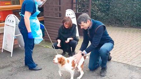 Vídeo | Una pareja se reúne de nuevo con su perro que fue robado seis años atrás