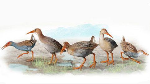 Las cinco especies de aves que Darwin no llegó a conocer en sus viajes