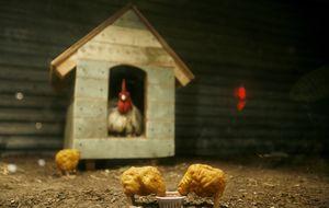 Qué hay de verdad dentro deun 'nugget' (y no, no es pollo)