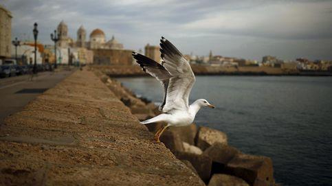 El New York Times se rinde a los encantos de Cádiz: Una ciudad vivida