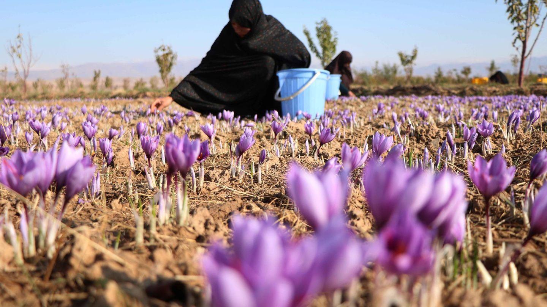 Mujeres afganas trabajando en Herat en 2019. (EFE)