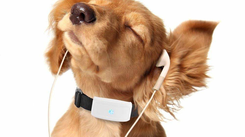 Un perro con el collar rastreador Tkstar (Imagen: Amazon)