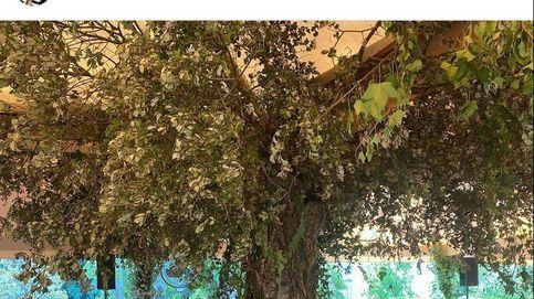 La boda de Carlos Fitz-James y Belén Corsini: la increíble decoración de los jardines