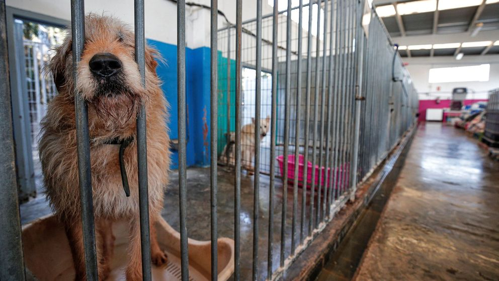 Los refugios de animales, al borde del colapso en España tras el confinamiento