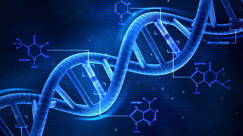 Test: ¿Te atreves a descubrir cuánto sabes sobre biología?