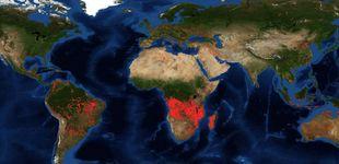 Post de El 'pulmón' por el que nadie llora: por qué África preocupa menos que el Amazonas