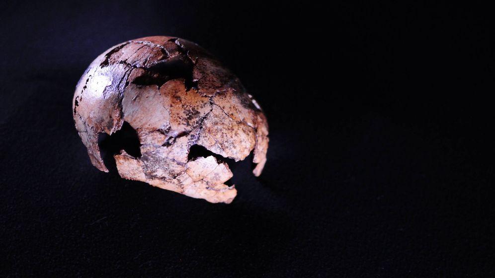 Foto: Cráneo DNH 134 de Homo erectus, encontrado en Sudáfrica. Foto: Universidad de Johannesburgo