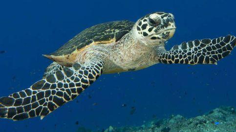 Devuelven al mar una tortuga después de dos años de recuperación