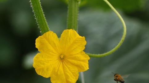 Una flor a las puertas del invierno bursátil