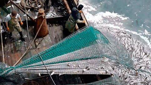 Merluza, gallo, rape... El pescado post-Brexit que no será tan 'español'