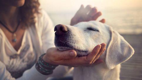 Las lecciones de vida que dan a diario los perros a las personas