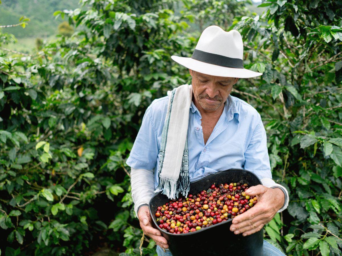 Foto: Café de Colombia. (iStock)