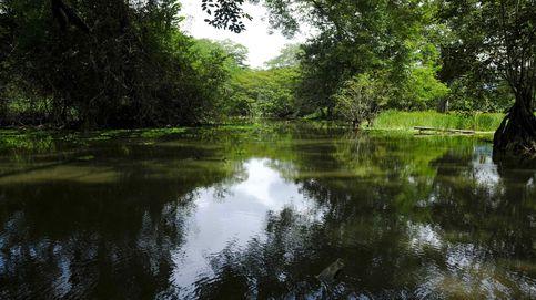 ¿Puede la naturaleza restaurar el equilibrio ecológico?