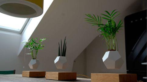 Lyfe: las plantas viven mejor en el aire
