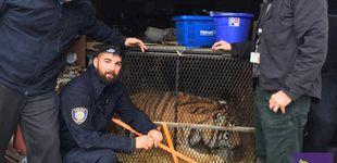 Post de Un hombre entra a consumir droga en una casa abandonada y encuentra un tigre
