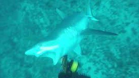 Un pescador graba el momento en el que un tiburón le ataca en Australia