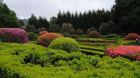 La ruta de las camelias, otra excusa más para viajar a Galicia (de pazo en pazo)