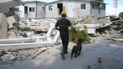 Gollum, Maya, Rasti y Heavy: perros 'españoles' buscarán desaparecidos en Beirut