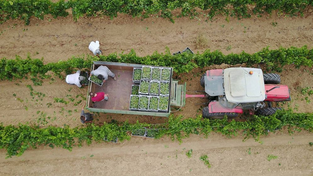 Foto: El vino Hermanos Lurton Verdejo 2018 procede de los viñedos al norte de la denominación, con suelos pobres, bien drenados y con agua subterránea y un particular microclima.
